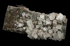 * 圖說:圖1.岩鹽是食用礦物,也是鹼工業的主要原料。* 作者:洪誌楀拍攝* 智財權:國立自然科學博物館