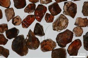 * 圖說:圖2.新竹關西馬武督一帶的紅褐色鋯石* 作者:洪誌楀拍攝* 智財權:國立自然科學博物館