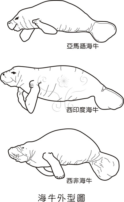 大肠杆菌形态图手绘