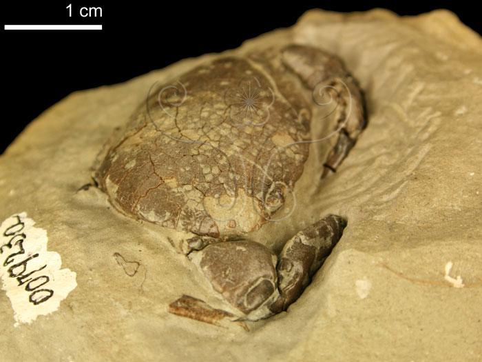无脊椎动物化石